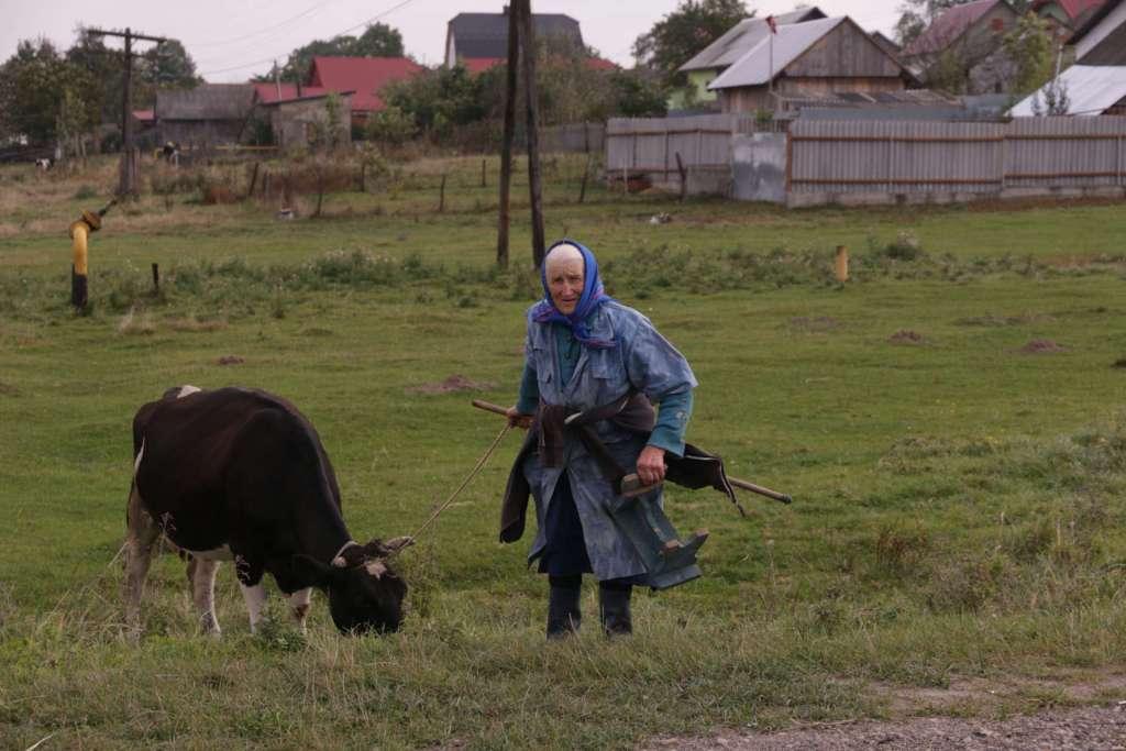 moviendo-la-vaca