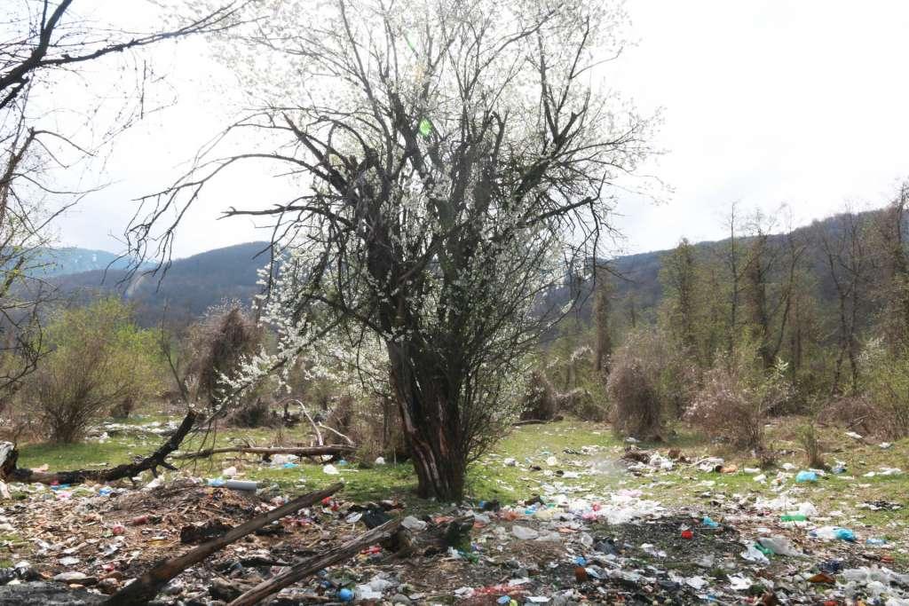 Almendro en flor de basura