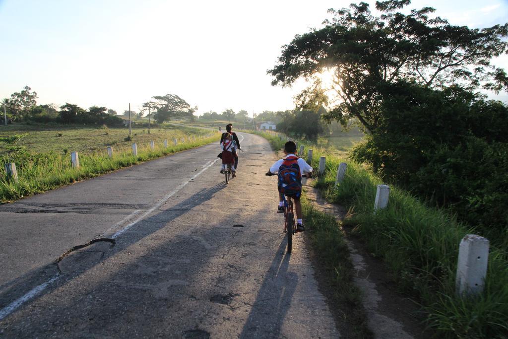 Bicicole